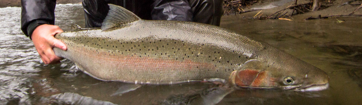 Fly Fishing Guides Olympic Peninsula