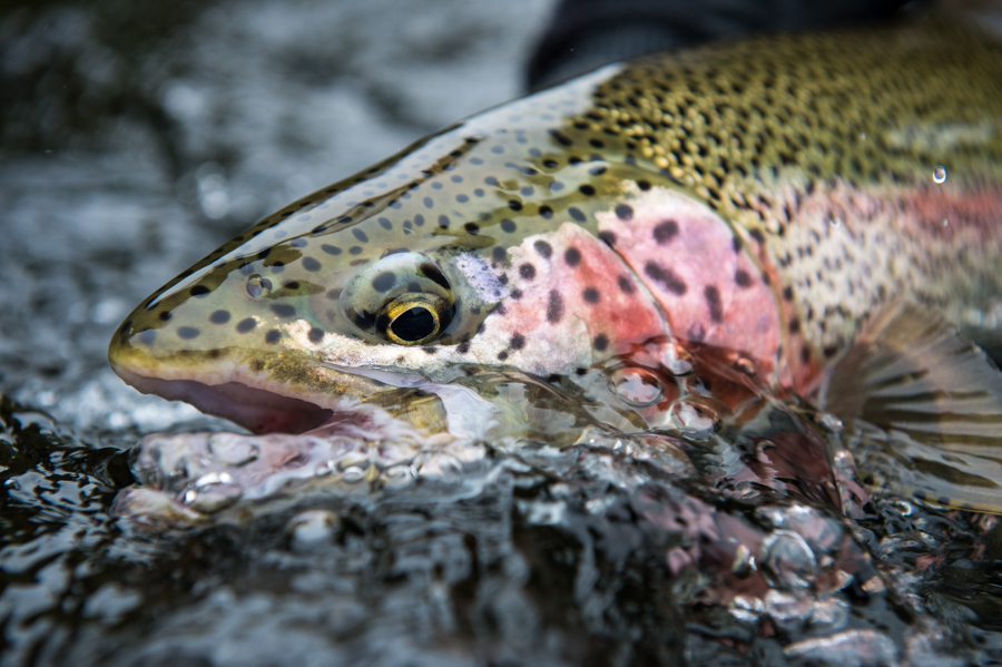 Alaska fly fishing 62 angler 39 s obsession for Seattle fly fishing shops