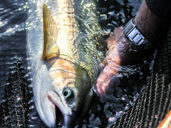 washington-state-fly-fishing-steelhead-guide-9