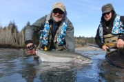 washington_steelhead_fly_fishing_guide_olympic_peninsula_forks_wa-14