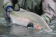 washington_steelhead_fly_fishing_guide_olympic_peninsula_forks_wa-18