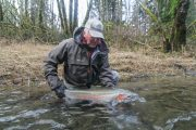 washington_steelhead_fly_fishing_guide_olympic_peninsula_forks_wa-2