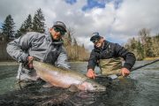 washington_steelhead_fly_fishing_guide_olympic_peninsula_forks_wa-38