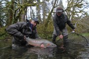 washington_steelhead_fly_fishing_guide_olympic_peninsula_forks_wa-40