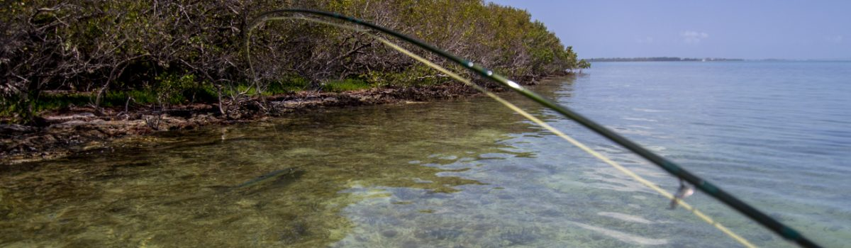Tarpon Fly Fishing Guide Florida Keys